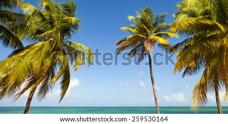 Tropical Ocean Beach with Palm Trees - stock photo