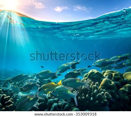 Tropical ocean life. Coral reef full of fish floating under water surface. Sunbeams light through ripples. Beautiful design postcard on blue marine background. - stock photo