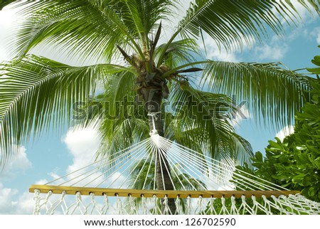 Tropical palm and homack - stock photo
