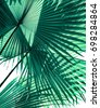 tropical palm foliage on white background