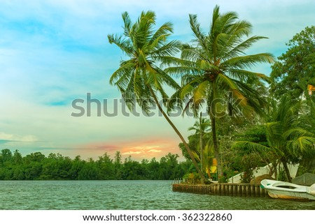 Tropical palm forest on the river bank. Tropical thickets mangrove forest on the island of Sri Lanka. - stock photo