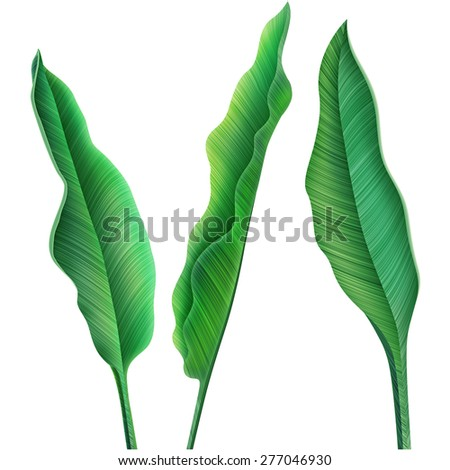 Tropical palm leaves. stylish fashion floral elements, in Hawaiian style - stock photo