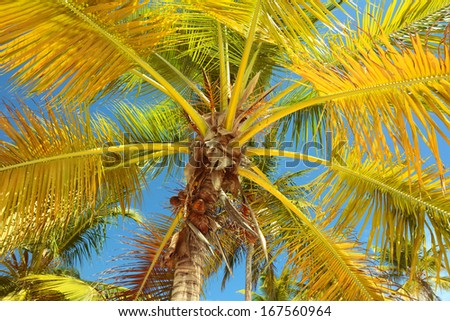 Tropical palm tree and blue sky - stock photo