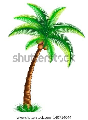 tropical palm tree on the grass. Rasterized illustration. Vector version in my portfolio