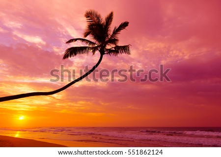 Tropical palm tree silhouette at sunset on empty beach