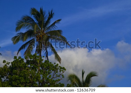 Tropical Palm Tree with puffy clouds in the backgound in Tahiti