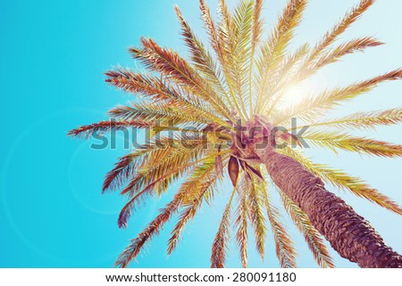 Tropical palm tree with sun flares - stock photo