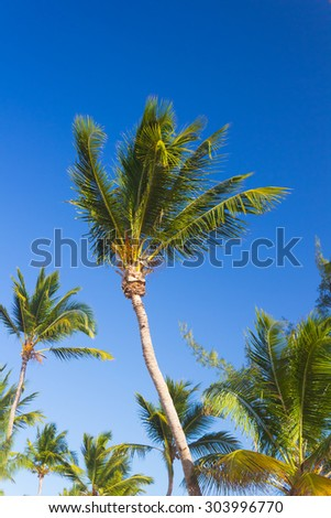 Tropical palm trees against clear blue sky