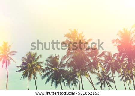 Tropical palm trees at sunny summer day, vintage stylized with retro film light leaks