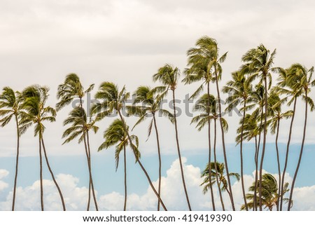 Tropical Palm Trees Blow in the Wind on an Island