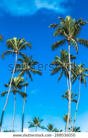 Tropical palm trees in the blue sky - stock photo