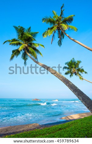 Tropical palm trees on ocean beach