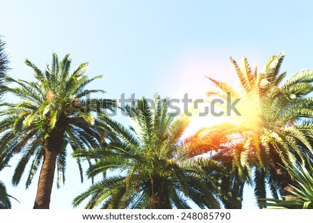 tropical palm trees   on sky background, instagram retro toned - stock photo