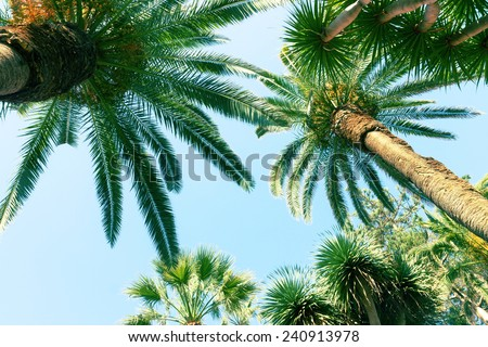 tropical palm trees   on sky background, retro toned - stock photo