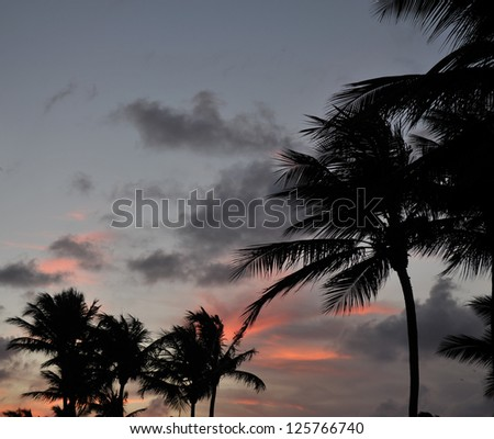 Tropical palm trees silhouetted against a beautiful sunset clouds