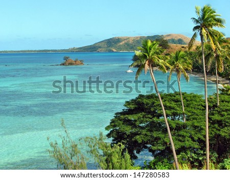 Tropical palms in Nacula island, Yasawa Islands, Fiji