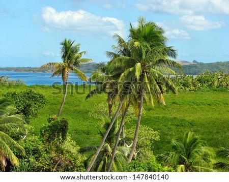 Tropical palms in Nacula island, Yasawa Islands, Fiji  - stock photo