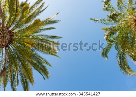 Tropical palms low angle view of fronds in breeze above against blue sky.