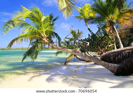 Tropical palms on wild beach