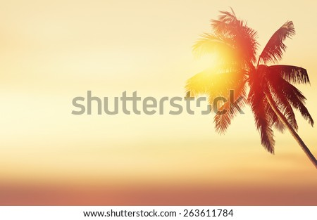 Tropical panoramic background with coconut palm at sunset and ocean landscape - stock photo