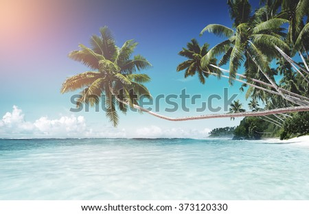 Tropical Paradise Beach Tranquil Scene Concept