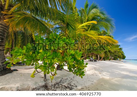 Tropical paradise: beautiful view through green palm leaves on a white sand beach in Maldives - stock photo
