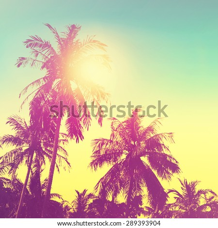Tropical paradise design banner background. Coconut palm tree silhouettes at sunset. Vintage effect. - stock photo