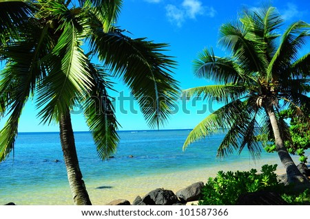 Tropical paradise in Kauai with palm trees and ocean