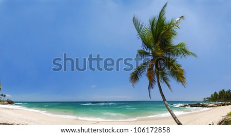Tropical paradise in Maldives with palms hanging over the beach and turquoise sea