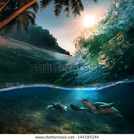 Tropical paradise template with sunlight. Ocean surfing wave breaking and two big green turtles diving underwater - stock photo