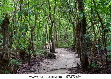 Tropical Pathway                                       - stock photo