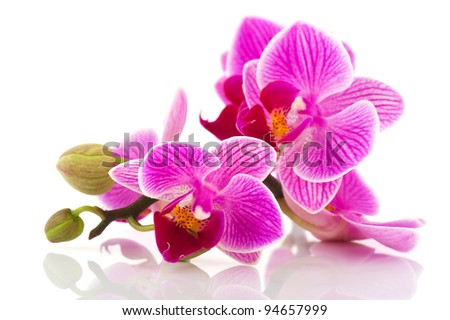 Tropical pink orchid isolated over white background - stock photo