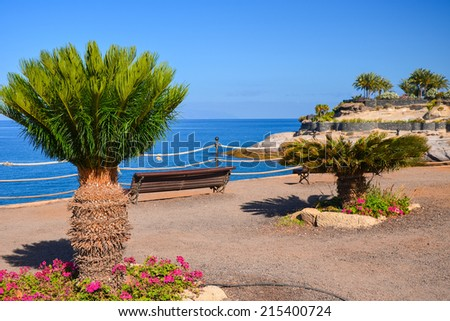 Tropical plant on coastal promenade near El Duque beach, Tenerife, Canary Islands, Spain - stock photo