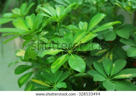 Tropical Plants in greenhouse, close-up - stock photo