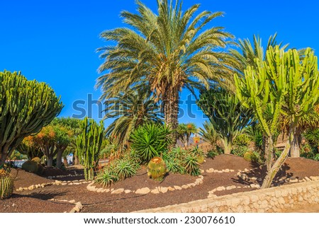 Tropical plants in park of Morro Jable coastal town on Fuerteventura island, Spain