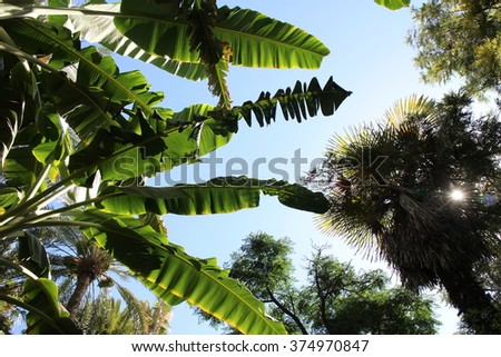 Tropical plants looking into blue sky background.