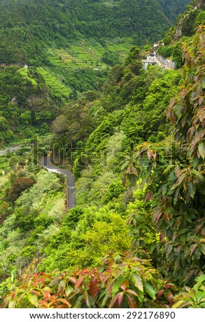 Tropical plants on southern coast of Madeira island, Portugal, Europe - stock photo