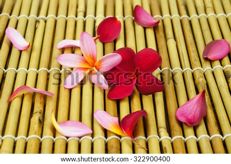 Tropical Plumeria on Bamboo for spa and wellness concept - stock photo