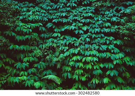 tropical rain forest, green wall background - stock photo