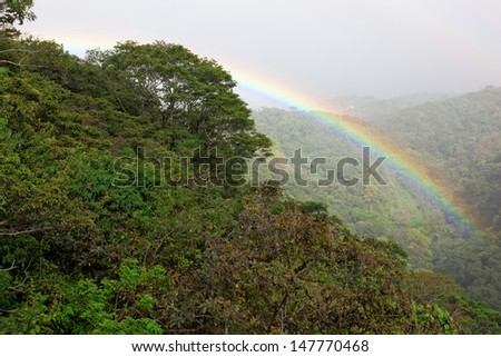 Tropical Rain Forest, Monteverde, Costa Rica, South America - stock photo