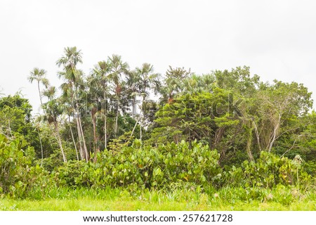 Tropical rainforest, Amazon,  Yasuni, Ecuador - stock photo