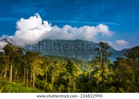 Tropical rainforest at Phu Soi Dao national park - stock photo
