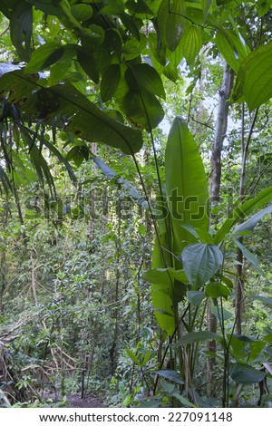Tropical rainforest in Costa Rica - Punta Leona, Puntarenas province, Costa Rica - stock photo
