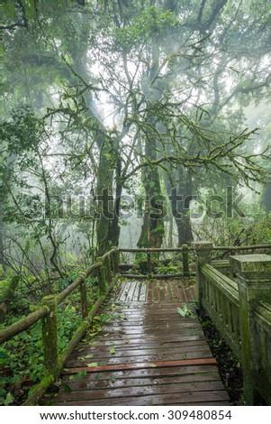 Tropical rainforest in doi inthanon national park, Thailand. - stock photo