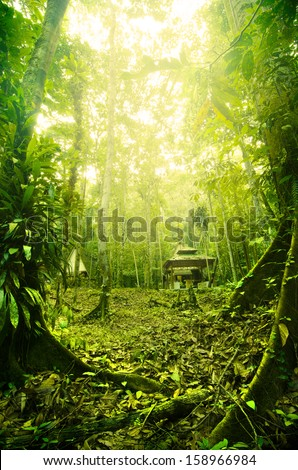 Tropical Rainforest in Malaysia during early morning with fogs - stock photo
