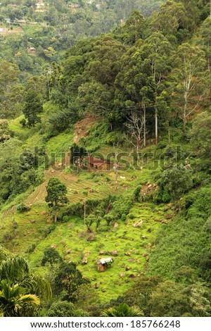 tropical rainforest landscape - stock photo