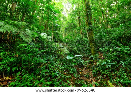 Tropical Rainforest Landscape - stock photo