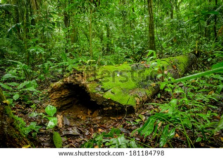 Tropical Rainforest Landscape, Amazon  Yasuni, Ecuador - stock photo