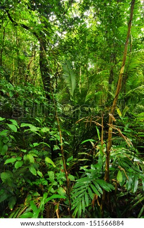 Tropical Rainforest Landscape, Thailand - stock photo