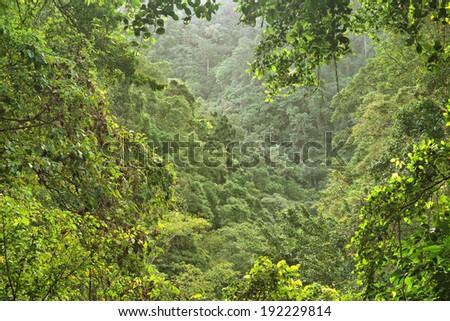 tropical rainforest near Cairns, Queensland, Australia - stock photo